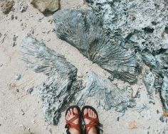 Coral Fossils Everywhere