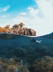 Exploring Apo Island